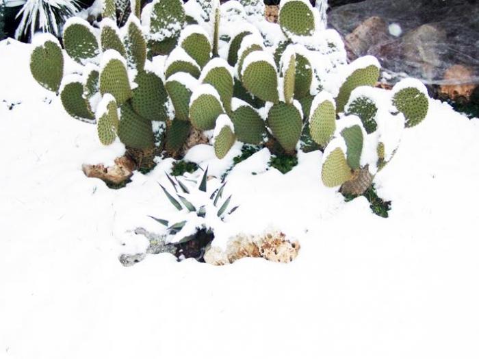 Terriccio professionale per piante grasse da esterno - Cactus da interno ...