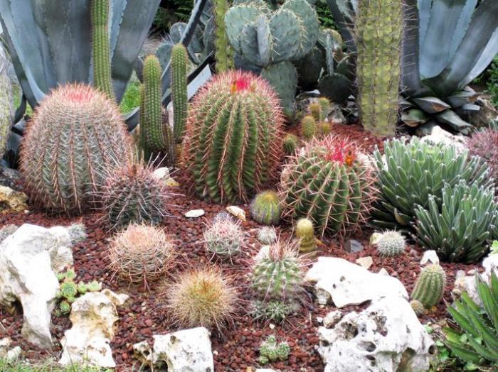 Terriccio professionale per piante grasse da esterno - Piante grasse da esterno pendenti ...