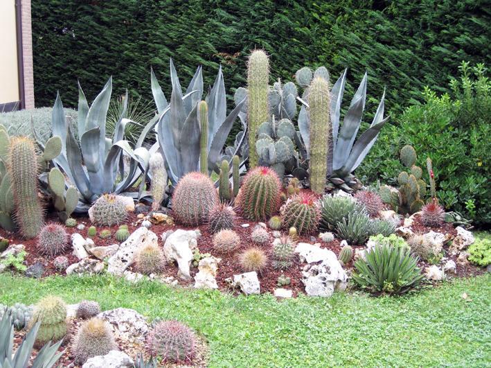 Terriccio Professionale Per Piante Grasse Da Esterno Cactus